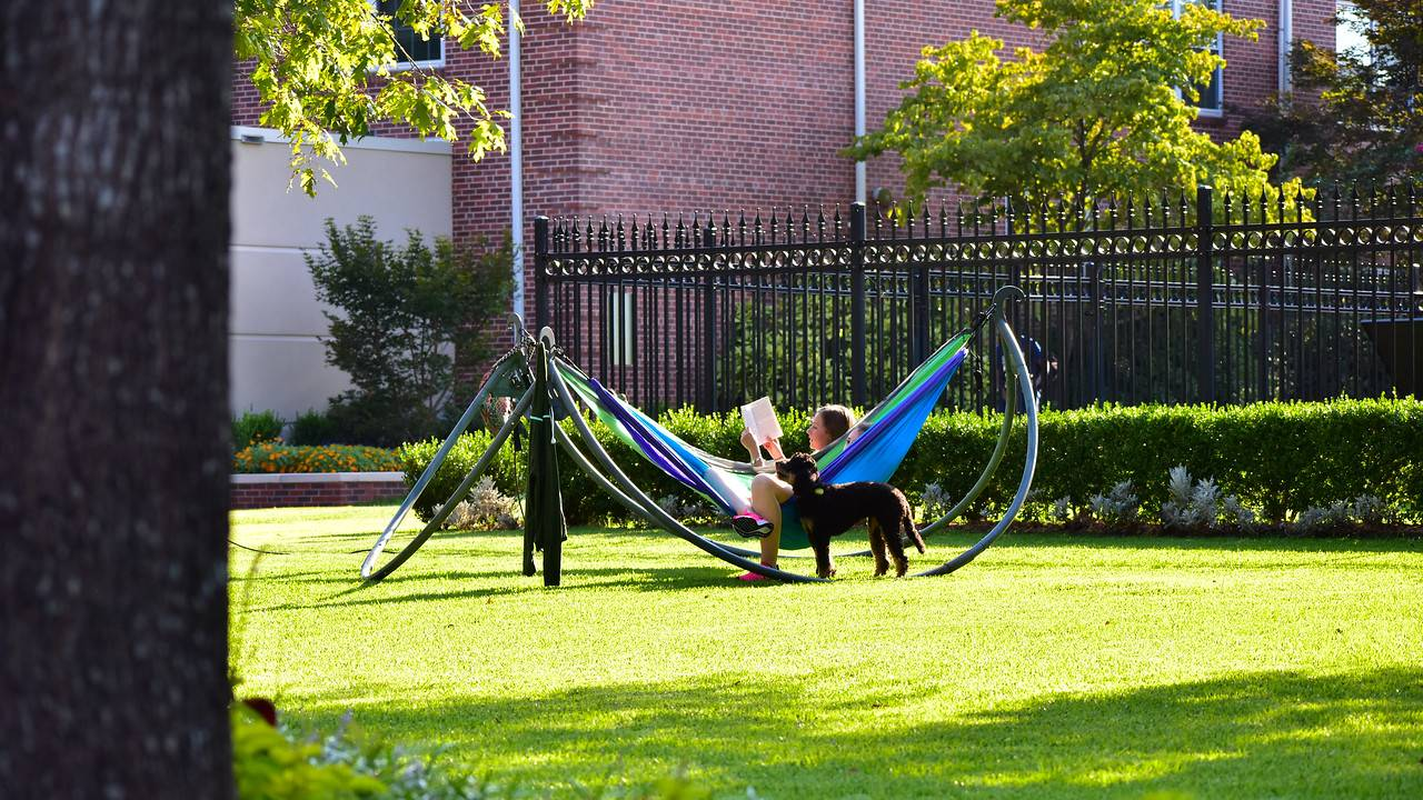 Students studying in hammocks